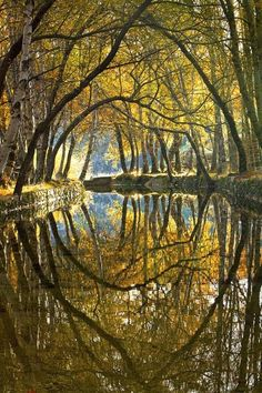 Phenomenal Reflection Pictures on Water