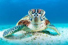 La plongée en Nouvelle-Calédonie Snorkeling, Regard Animal, Turtle Love, Underwater World, Ocean Life, Archipelago, Funny Faces, Scuba Diving, French Polynesia