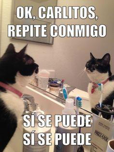 Voz Pasiva Esta semana el gatito dice: Ok, Carlitos, repite conmigo: Sí se puede, sí se puede.