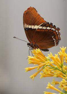 Brookside Gardens - Wings of Fancy   Elaine   Flickr