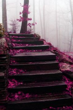 staircase in the Blue Ridge Mountains My brother where do you intend to go tonight? I heard that you missed your connecting flight, to the blue ridge mountains, over near Tennessee. Beautiful World, Beautiful Places, Beautiful Pictures, Beautiful Stairs, Beautiful Scenery, Beautiful Gorgeous, Wonderful Places, Blue Ridge Mountains, Nc Mountains