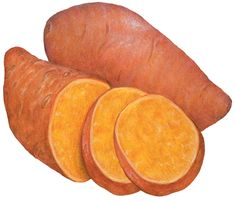 Watercolor food illustration of one whole sweet potato, one cut half with two sweet potato slices.