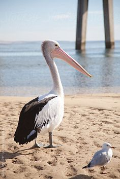 A pelican and a seagull strut a beach, together...reminds me of the pier at St. Petersburg, Florida