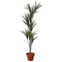 Artificial plant, 6' yucca