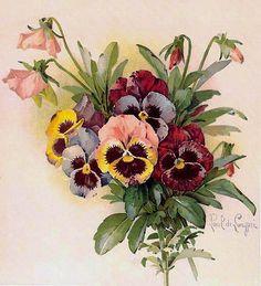 Risultati immagini per paul de longpre' Vintage Blume Tattoo, Vintage Flower Tattoo, Vintage Flowers, Botanical Prints, Floral Prints, Victorian Artwork, Floral Back Tattoos, Decoupage Printables, Decoupage Vintage