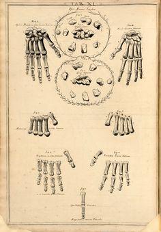 Bones of the Left Hand