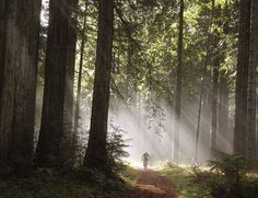 redwood forest mountain bike trails - Google Search