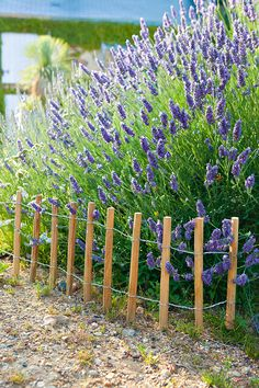 Fabriquer des minis clôtures pour le jardin - Fences for garden Ranch Fencing, Garden Fencing, Garden Yard Ideas, Garden Tools, Diy Fence, Rose Bush, Permaculture, Planters, Home And Garden