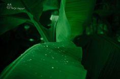 Banana Leaf by Tanja Kappler on 500px