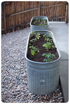 horse troughs as a vegetable garden.......)paint the outside of troughs in your colors....plant tomatoes and put on patio!...bj(