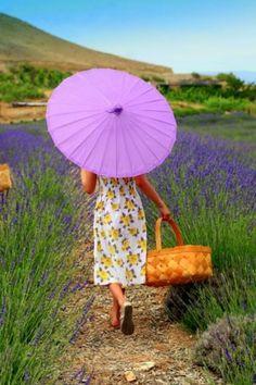 Lavender Field - Sage Creations Organic Farm