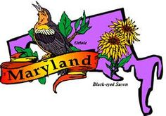 State flower is the black-eyed susan, state bird is the Oriole.