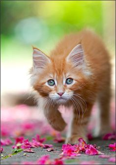 such sweetness! orange kitty