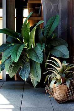 - Industrial-Style Urban Courtyard Healthy specimens include *Spathiphyllum* 'Sensation' (left) and a bromeliad, *Vriesea fosteriana*.Healthy specimens include *Spathiphyllum* 'Sensation' (left) and a bromeliad, *Vriesea fosteriana*. Terrace Garden, Garden Paths, Garden Tools, Garden Ideas, Tower Garden, Urban Garden Design, Home Vegetable Garden, Interior Garden, Garden Structures
