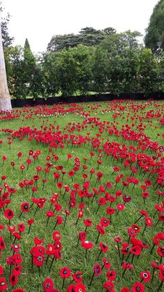 We are now in the process of creating our final two projects for the Centenary of Anzac The first is for the Victorian RSL and the Australian War Memorial & Knitted Poppy Free Pattern, Poppy Pattern, Knitted Poppies, Poppy Craft, Anzac Day, Lest We Forget, Yarn Bombing, Red Poppies, Memorial Day