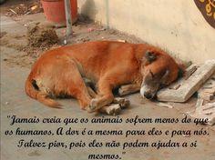 Imagens - Imagens de animais domesticos