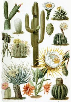 Various Cactaceae | AnOther Loves