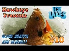 bf59be2c41d Ice Lakes - Ep.  10 - Black Crappie and Bluegill! Ice LakeIce FishingLakes CompetitionPonds
