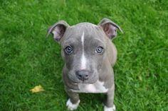 handsomedogsblue eyes  Elly De Corte