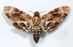 moth   colorful beerobber moth e1293218297134 Fascinating and Wonderfully ...