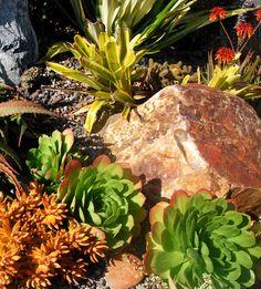 https://flic.kr/p/7miNRp | Nancy's Front Garden ~ November 2009 | Landscape design, installation and photo by Michael Buckner, The Plant Man, San Diego. DSC_2948