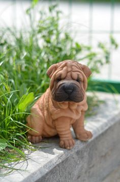 "SHAR PEI PUPPY sitting DOG FIGURINE STATUE RESIN PET 6.25"" H CANINE br/blac"