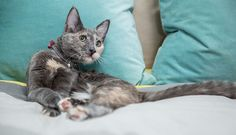 Can't Sleep? Get your cat. Mayo Clinic researchers say cats help nighttime rest.
