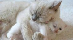 Aw... mommy and baby, beautiful <3