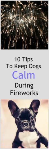 The 4th of July is on its way, and with it fireworks. Fireworks are a joyous occasion for all the people involved, but often a frightening one for the animals. If fireworks make your dog panic, read on to learn some tips and suggestions for making this Fourth of July easier for your dog.