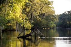 A trip down the Lumber River shows the natural beauty of Robeson County