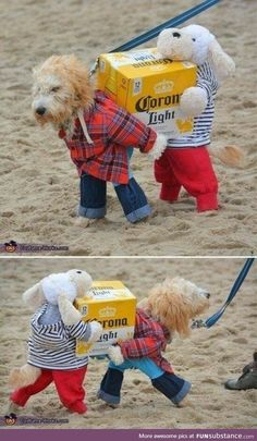 Little helper Funny Animal Pictures, Cute Funny Animals, Cute Baby Animals, Funny Cute, Funny Dogs, Super Funny, Animal Pics, Animals Dog, Animal Memes