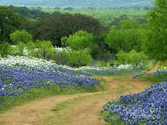 Texas Photograph - From Here To There by Joe Jake Pratt