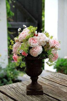 Roses Félicité Parmentier et The Fairy  Alchemille mollis  Géranium pyrenaicum album  Géranium magnificum (fruits)