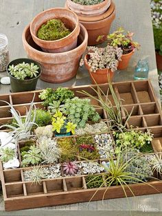 Create a tiny garden that is just the way you want it! Miniature gardens give you complete control, and look so cute and adorable! Try making one in a vintage printer tray, a picnic basket, an old urn, or any other unexpected place. Little plants and fun accessories can create a lovely little world.