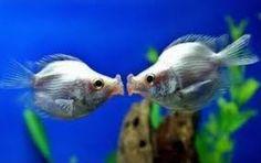 Výsledek obrázku pro kissing animals