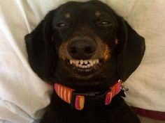 This girl found a pillow that's just right. | 17 Smiling Dogs That Will Instantly Brighten Your Day