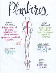 How to massage Muscle Anatomy, Body Anatomy, Anatomy Bones, Pilates, Muscular System Anatomy, Examen Clinique, Physical Therapy School, Medicine Notes, Cabinet Medical