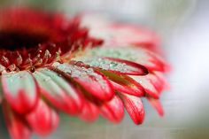 Photograph SOFT DROPS by Charo  Arroyo on 500px
