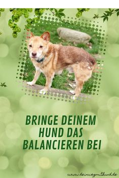 Hunde lieben es, auf einem Baumstamm zu balancieren. In diesem Artikel erfährst du, wie du es deinem Hund beibringen kannst.  Hundetraining | Leben mit Hund | Tricks, Fitness, Dogs, Movie Posters, Movies, Fun, Cool Dogs, Social Behavior, Dog Care