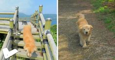 Are you a fan of using virtual maps to explore new places? Well, you're in for a treat, because these pictures taken in Ulleung-gun, Gyeongbuk, South Korea, not only give you a street view - you also get a friendly golden doggo to accompany you and be your guide.
