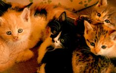 THESE ARE MIA'S KITTENS. MIA IS THE BARN CAT WE SAVED AND BEFORE WE COULD GET HER FIX, SHE GAVE US SIX KITTENS...who are looking for good homes. MIA WILL BE HAVING SURGERY IN THE NEAR FUTURE   Must Have Pet Insurance! http://www.offers.couponrainbow.com/embrace-pet-insurance/