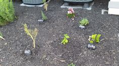 paint rocks using charcoal spray paint and use as herb markers in your herb garden!