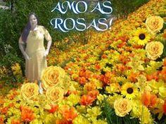 Montagem de 3 fotos entre flores