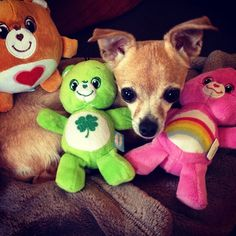 Fetch Care Bears plush for pets, available at PetSmart!