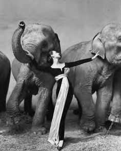 Dovima et les éléphants, Robe du soir de Dior, Cirque d'Hiver, Paris, 1955.  Photographie Richard Avedon <3