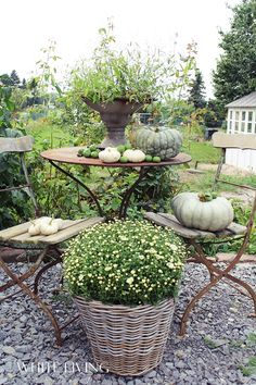 old bistro set on crushed aggregate with vintage brick step down border Autumn Garden, Autumn Home, Garden Living, Home And Garden, Bistro Set, Outdoor Living, Outdoor Decor, Amazing Gardens, Garden Furniture