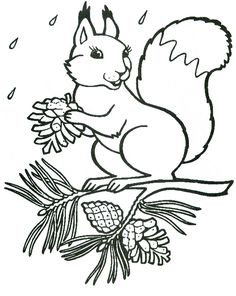 Colouring Pages, Coloring Pages For Kids, Coloring Sheets, Squirrel Coloring Page, Plaster Crafts, Digi Stamps, Girl With Hat, Art Pages, Stone Painting