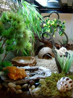 Welcome to crab heaven! I decided to uprgrade to a 29 gallon tank so I can enjoy my crabs even more! In this new crabitat, I added a bubblin. Hermit Crab Cage, Hermit Crab Homes, Hermit Crab Habitat, Hermit Crabs, Gecko Terrarium, Reptile Terrarium, Pacman Frog, Pet Snails, Crab House
