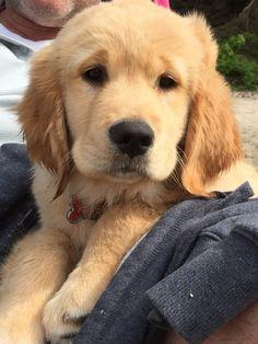 Piper the Puppy