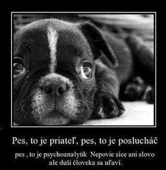 Bulldog Puppies, Dogs And Puppies, Black And White Face, French Bulldog, Eyes, Wallpaper, Animals, Sadness, Boston